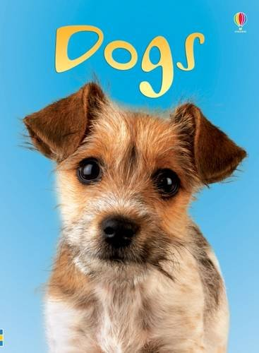 Dogs (Beginners)