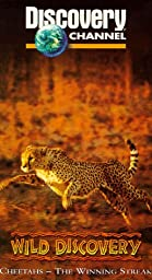 Wild Discovery: Cheetahs [VHS]