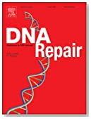 The mechanics of base excision repair, and its relationship to aging and disease [An article from: DNA Repair]
