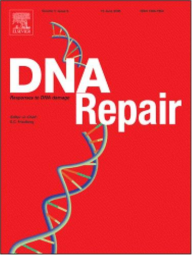 Binding Of Muts Mismatch Repair Protein To Dna Containing Uv Photoproducts, ''Mismatched'' Opposite Watson-Crick And Novel Nucleotides, In Different Dna Sequence Contexts [An Article From: Dna Repair]
