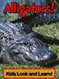 Alligators! Learn About Alligators and Enjoy Colorful Pictures - Look and Learn! (50+ Photos of Alligators)