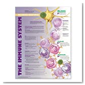 The Immune System: Allergic Response Anatomical Chart