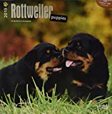 Rottweiler Puppies 2015 Wall