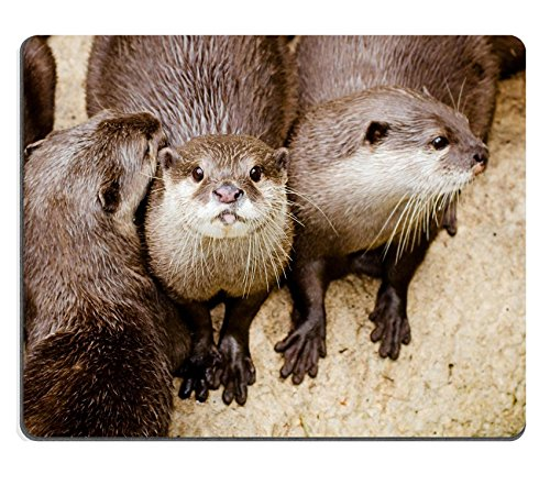 luxlady-mousepad-asian-small-otters-image-19508410