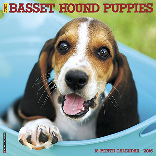 2016 Just Basset Hound Puppies Wall Calendar