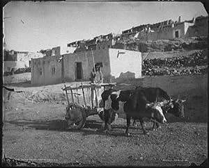 Amazon.com: Photo: Old carreta, ox teams, Pueblo, Laguna