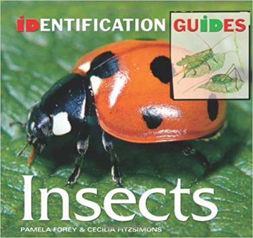 Beetle Insect Identification Insects Identification Guide
