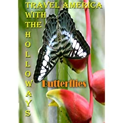 Travel America with the  Holloways - Butterlies