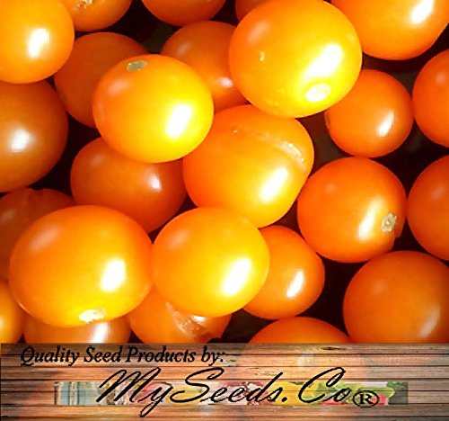 SUNSUGAR SUN SUGAR TOMATO SEED ~ SWEETEST TOMATO AVAILABLE ? - EXTREMELY SWEET - Very Early Cherry Tomato - 50 - 55 DAYS (0015 Seeds - 15 Seeds - Pkt. Size) (Sweet Tomato Seeds compare prices)