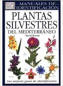 Plantas silvestres del Mediterráneo: BURNIE: 9788428210362: Amazon