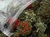 Appalachian Emporiums Large Terrarium Mix of British Soldier Pixie Cup Pityrea Live Lichens Moss 1 Pint Bag