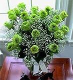 5 GREEN ROSE Rosa Bush Shrub Perennial Flower Seeds *Comb S/H