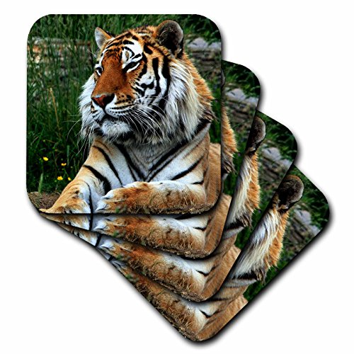 Sven Herkenrath Animal - Tiger in the Nature - set of 4 Coasters - Soft (cst_236637_1)