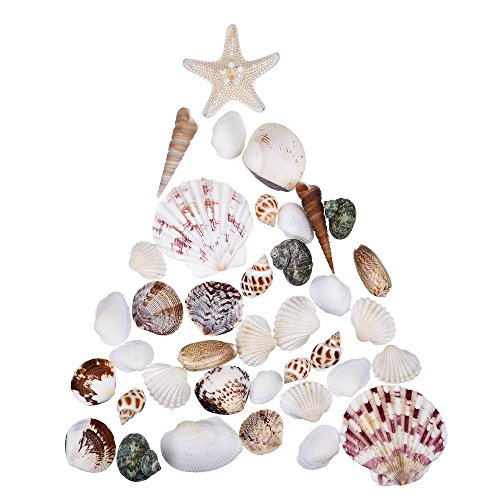 mudder-natural-sea-shells-mixed-beach-seashells-for-decoration-arts-crafts