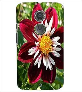 PrintDhaba Flower D-1138 Back Case Cover for MOTOROLA MOTO X2 (Multi-Coloured)