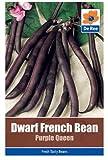 Dwarf French Bean Purple Queen