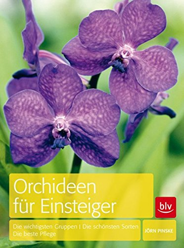 orchideen-fur-einsteiger-die-wichtigsten-gruppen-die-schonsten-sorten-die-beste-pflege