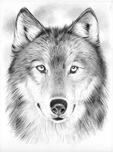 Reeves Wolf Sketching by Numbers, Medium