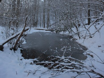 Ice-Covered Vernal Pond and Snow-Blanketed Wooodlands