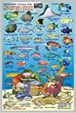 img - for Cayman Islands Reef Creatures Guide Franko Maps Laminated Fish Card 4