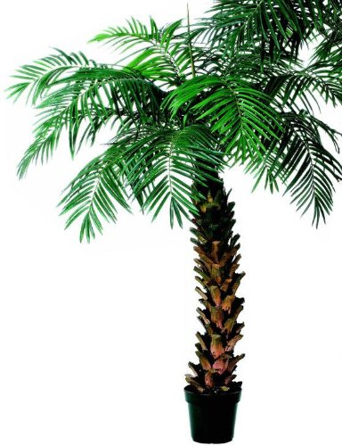 Potted Areca Palm Tree Topiary, 7′, GREEN