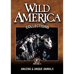 Amazing and Unique Animals Collection
