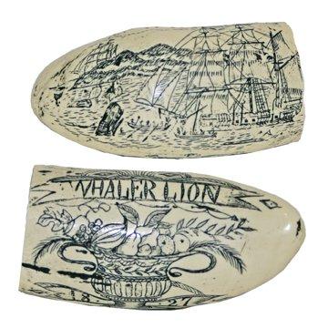 (DM 311 Whaler Lion