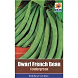 Vegetable Seed Collections - Dwarf French Beans (Tender Green)