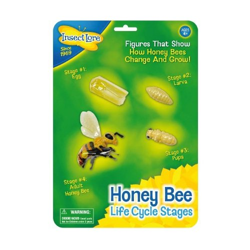 Insect Lore Bee Life Cycle Stages Toy