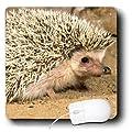 3dRose LLC 8 x 8 x 0.25 African Hedgehog Wildlife Native to Africa David Northcott Mouse Pad (mp_83937_1)
