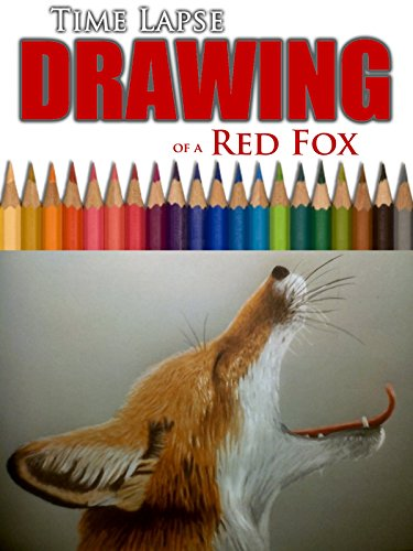 Clip: Time Lapse Drawing of a Red Fox