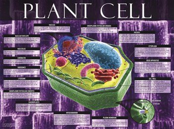 Plant Cell Poster