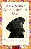 Mein Leben mit Beau: Wie ein Labrador mein Herz gewann