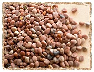 Organic China Rose Radish Seeds - 5 Pounds