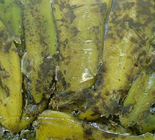 2 Lb. Premium Roasted Hatch Green Chile, Medium Flavor (New Mexican Green Chili compare prices)