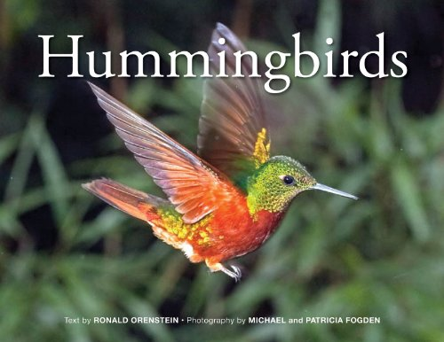 Buy Hummingbirds Now!