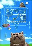 気が付けばデブ猫—ニャン吉のぐ~たら日記