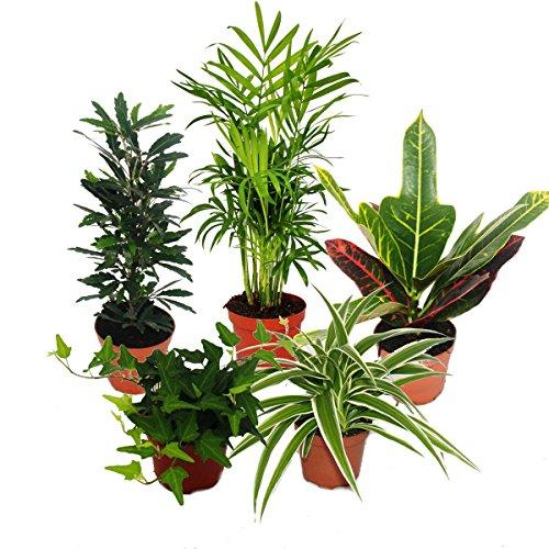 grosses-zimmerpflanzen-set-mit-5-pflanzen-9cm