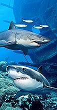 Two Sharks Terry Velour BeachBath Towel