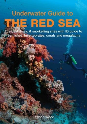 underwater-guide-to-the-red-sea
