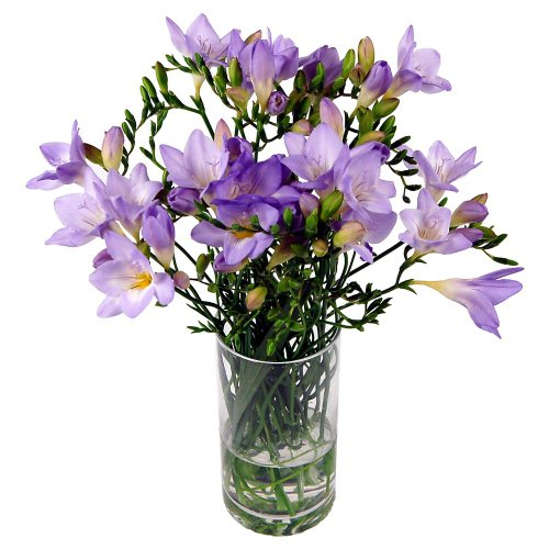 clare-florist-purple-freesia-bouquet-fresh-fragrant-freesia-flowers-to-brighten-your-day