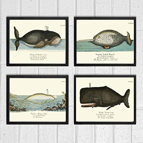 whale-art-print-set-of-4-antique-beautiful-ocean-sea-marine-nature-colored-natural-science-chart-ill