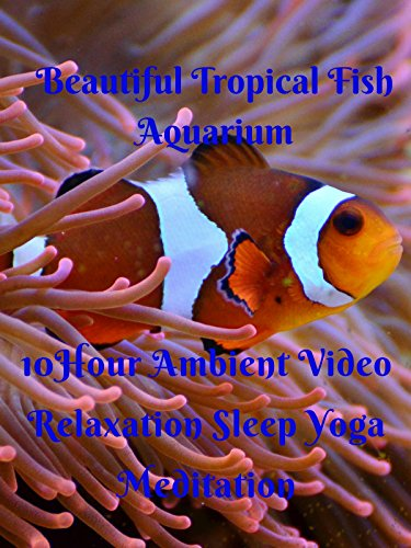 Beautiful tropical fish aquarium 10 hour ambient video relaxation sleep yoga meditation