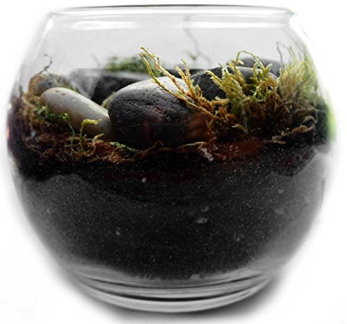 Complete Terrarium Container Kit: Succulent Soil with Glass Globe + All Supplies for Cactus or Succulent Kit