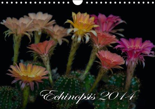 Echinopsis 2015 (Wandkalender 2015 DIN A4 quer): Kakteen Blüten (Monatskalender, 14 Seiten)