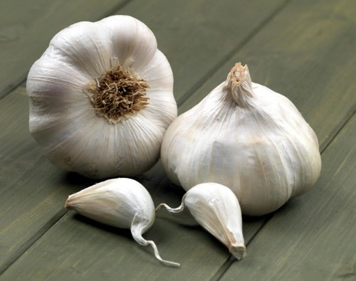 3-bulbs-Isle-of-Wight-Seed-Garlic-Albigensian-Wight-Very-large-bulbs-sow-til-Jan