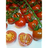 Vittoria Tomato Seeds approx 20 seeds. Fragrant, Very tasty vine Tomatoes
