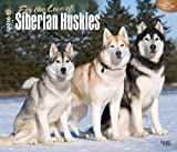 Siberian Huskies, For the Love of 2016 Deluxe