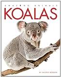 Amazing Animals: Koalas
