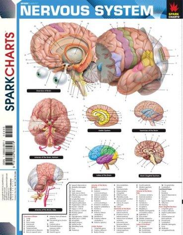Nervous System (SparkCharts)